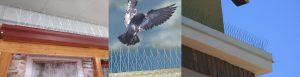 Zastita od ptica nacini primjene